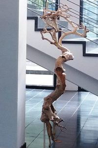 Das Entwurzelte Bäumchen, Sept. 2016